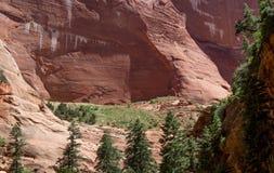 Canyon rosso Zion National Park 13 di Kolob della roccia Fotografie Stock
