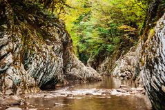 Canyon stream in the rainforest royalty free stock images