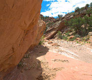 Canyon stretto del deserto con i fiori selvaggi Immagini Stock