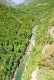 Canyon Tara Stock Photography