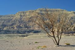 Canyon in Timna park, Israel Royalty Free Stock Photography