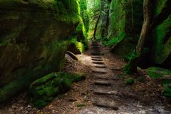 Canyon trail at Dismals Canyon royalty free stock photography