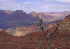 Canyon Tree Stock Images