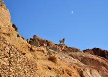 Canyon Tunisia, Africa Royalty Free Stock Photo