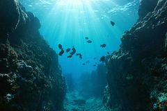 Canyon underwater with sunlight Pacific ocean. Small canyon underwater carved by the swell into the fore reef with sunlight through water surface, Huahine island Royalty Free Stock Photo