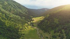 Canyon vert avec la forêt de pin et la rivière de courbe banque de vidéos