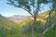 Canyon View. View over the Rocky Mountains royalty free stock photography