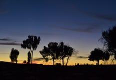 Canyon Wattarka国王国家公园 免版税库存照片