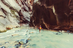 Canyon in Zion Royalty Free Stock Photos