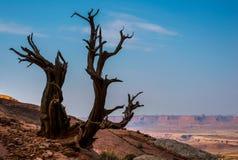 canyonland Arkivbild