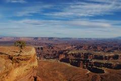 Canyonlands国家公园,犹他 免版税图库摄影