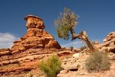 Canyonlands Anordnung und Wüsten-Wacholderbusch Stockbild