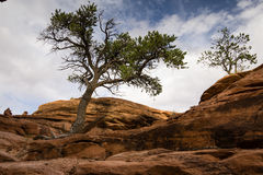 Canyonlands Backcountry slinga Arkivfoto