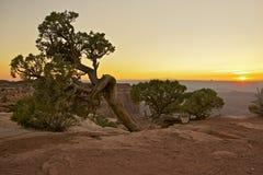 Canyonlands flory Obraz Stock