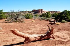 Canyonlands National Park Stock Image