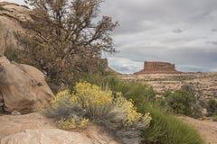 Canyonlands National Park Royalty Free Stock Image