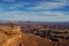 Canyonlands National Park, Utah. Lonely tree and canyons in Canyonlands National Park Royalty Free Stock Photography