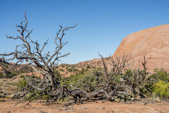 Canyonlands nationalpark, Utah en Royaltyfri Foto
