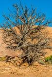 Canyonlands nationalpark, Utah en Arkivbild