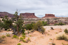 Canyonlands Nationalpark, Utah, USA Lizenzfreie Stockfotografie