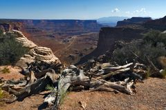 canyonlands park narodowy usa Utah fotografia royalty free