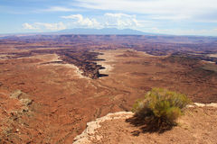 Canyonlands, Utah, North America,. A piece of vegetation in Canyonlands, Utah, USA Stock Image