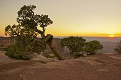 Canyonlandsflora Stock Afbeelding