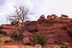 Canyonlandsuitzicht Stock Afbeeldingen