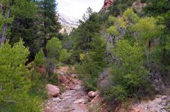 Canyons de Kolob, Zion National Park, Utah Image stock