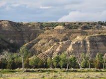 Canyons et arbres de peuplier, Teddy Roosevelt National Park, le Dakota du Nord Photographie stock libre de droits