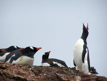 Canzone antartica Fotografie Stock Libere da Diritti