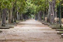 caobos Los parque Στοκ Εικόνα