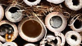 Caos e insectshotel de las abejas almacen de metraje de vídeo