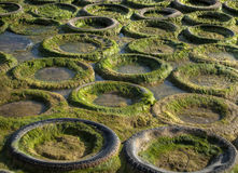Caoutchouc et algues Photos libres de droits