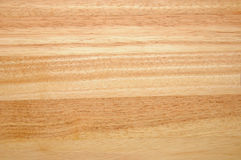 Caoutchouc wood Royalty Free Stock Images