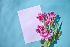 Capítulo adornado con un ramo de tulipanes rosados blandos en un fondo azul Disposición para la tarjeta de felicitación Endecha p Fotos de archivo libres de regalías