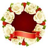 Capítulo blanco de Rose en la dimensión de una variable de redondo Imagen de archivo libre de regalías