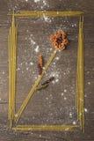 Capítulo con goma y la flor imagenes de archivo