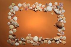 Capítulo con las conchas marinas Foto de archivo