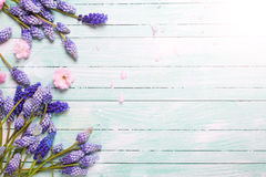 Capítulo con las flores del resorte Foto de archivo