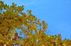 Capítulo con las hojas de otoño Fotos de archivo libres de regalías