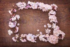 Capítulo con las ramas florecientes en el tablero de madera Fotos de archivo libres de regalías