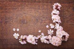 Capítulo con las ramas florecientes en el tablero de madera Imagen de archivo libre de regalías