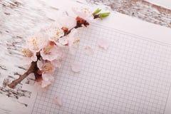 Capítulo con las ramas florecientes en el tablero de madera Fotos de archivo