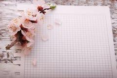 Capítulo con las ramas florecientes en el tablero de madera Imagen de archivo