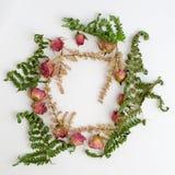 Capítulo con las rosas aisladas en el fondo blanco Imagen plana del diseño con la visión superior Foto de archivo libre de regalías