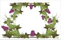 Capítulo con las uvas Fotografía de archivo
