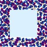 Capítulo con las uvas, marco abstracto de la fruta, Fotografía de archivo libre de regalías