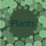 Capítulo con los modelos del color verde de los colores brillantes Imagen de archivo libre de regalías