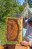 Capítulo con los panales con la miel Imagen de archivo
